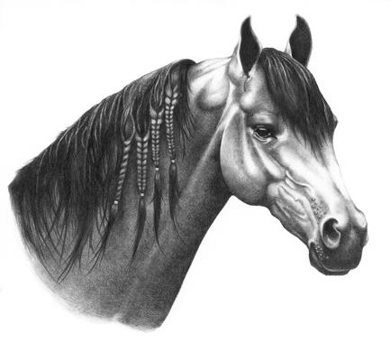 Arabian Horse Pencil Drawings Arabian Horse Pencil Drawing